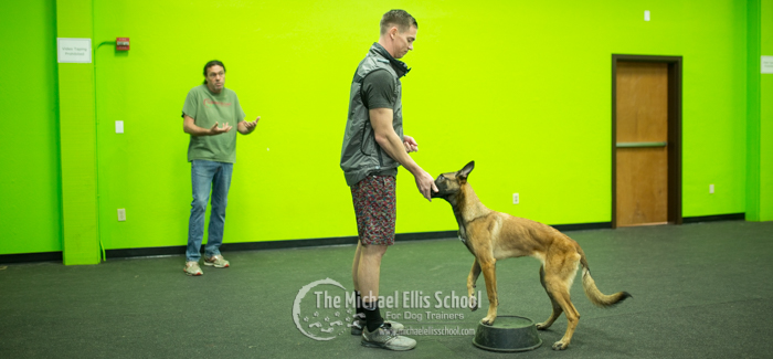 The Michael Ellis School For Dog Trainers