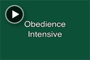 Obedience Intensive Course Video